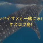 【セブ島留学】ジンベイザメと一緒に泳ぐツアー!!